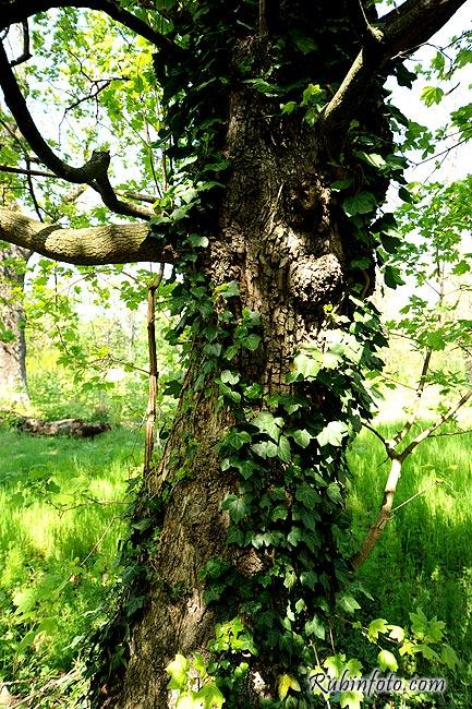 Tree_Sered.jpg